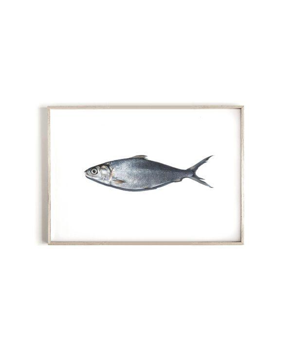 'MilkFish' limited edition print
